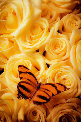Yellow Roses And Butterfly Print by Garry Gay