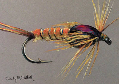 Yellow Sally Stonefly Nymph Print by Cindy Gillett