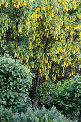 Botanic Photograph - Yellow Spring Tree by Lise-Lotte Larsson