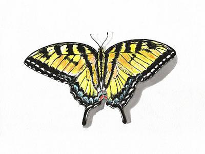 Blue Swallowtail Drawing - Yellow Swallowtail Butterfly by Masha Batkova