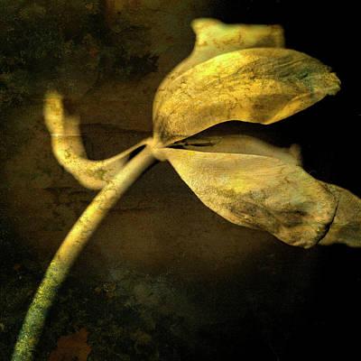 Yellow Tulip Print by Bernard Jaubert