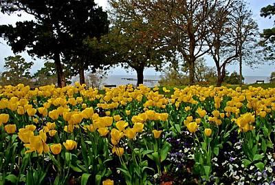 Yellow Tulips Of Fairhope Alabama Original by Michael Thomas
