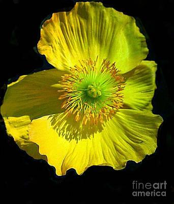 Yellow Windflower Original by ARTography by Pamela Smale Williams
