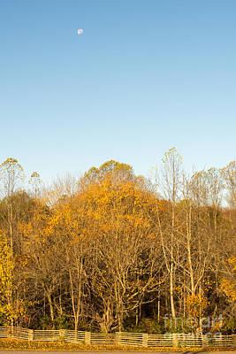 Natchez Trace Parkway Photograph - Yellow Yellow Everywhere - Natchez Trace by Debra Martz