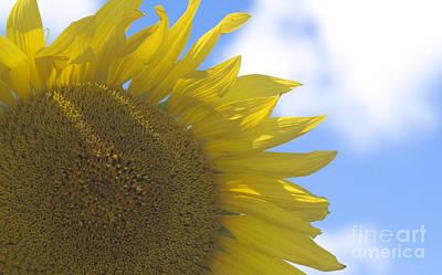 Yellowness Creates Happyness  Print by Tara Lynn
