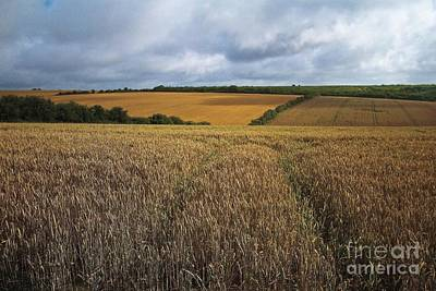 Yelow Fields And Fluffy Clouds  Print by Gary Bridger