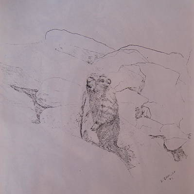 Yosemite National Park Drawing - Yosemite Marmot by Lessandra Grimley