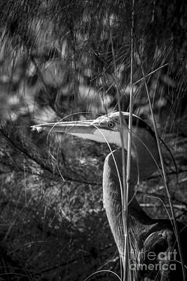 Wading Bird Photograph - You Can't See Me-bw by Marvin Spates