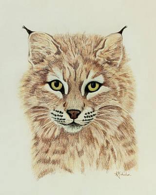 Young Bobcat Print by Karen Mahnken