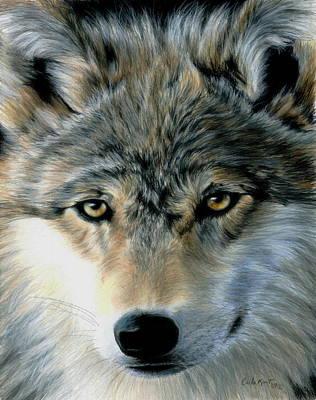 Wolf Drawing - Young Wolf by Carla Kurt