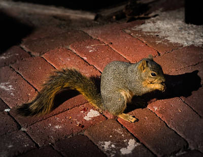You're Nuts Print by Jamie Lindenmeier