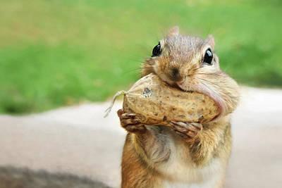 Squirrel Mixed Media - Yummy by Lori Deiter