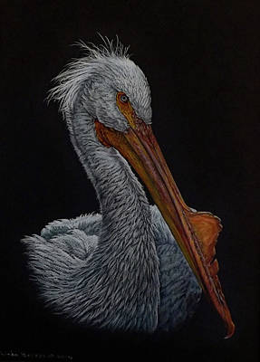 Pelican Drawing - Zamboni by Linda Becker