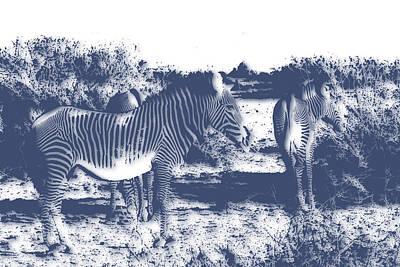 Zebra Photograph - Zebra 4 by Joe Hamilton
