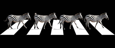 Zebra Crossing In Black And White Print by Gill Billington