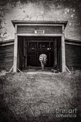 Surreal Barns Photograph - Zebra by Edward Fielding