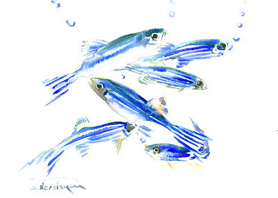 Zebra Drawing - Zebra Fish, Danio by Suren Nersisyan