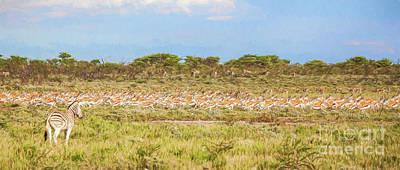 Zebra Digital Art - Zebra Watching Springbok Stampede by Liz Leyden