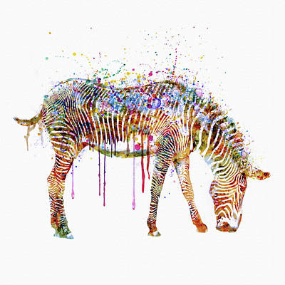 Zebra Watercolor Painting Print by Marian Voicu