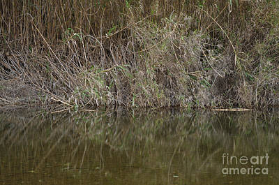 Creek Photograph - Zen Creek And Bamboos by Angelo DeVal