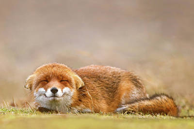 Mindfulness Photograph - Zen Fox Series - Smiling Fox Is Smiling by Roeselien Raimond
