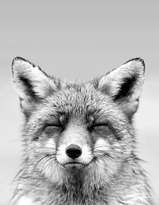 Sleepy Photograph - Zen Fox Series - Smiling Fox Portrait Bw by Roeselien Raimond