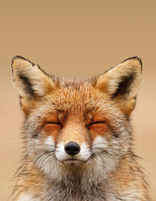 Lazy Photograph - Zen Fox Series - Smiling Fox Portrait by Roeselien Raimond