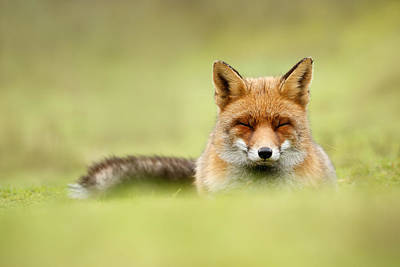Zen Fox Series - Zen Fox In A Sea Of Green Print by Roeselien Raimond