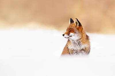 Zen Fox Series - Zen Fox In Winter Mood Print by Roeselien Raimond