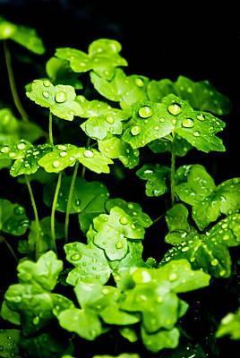 Wet Leaves Photograph - Zen Waterdrops by Parker Cunningham