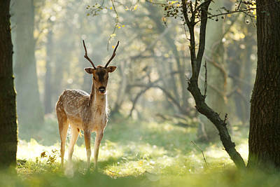 Buck Photograph - Zendeer by Roeselien Raimond