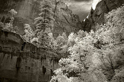 Nature Infrared Photograph - Zion by Mike Irwin