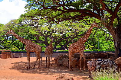 Photograph - Zoo Giraffes And Zebras by Mary Deal