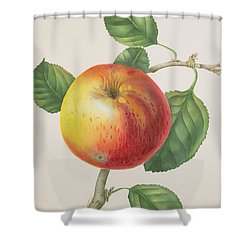 An Apple Shower Curtain by Elizabeth Jane Hill