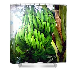 Banana Plants Shower Curtain by Lanjee Chee