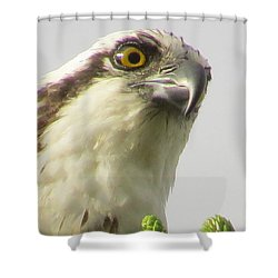 Eye Of The Osprey Shower Curtain by Zina Stromberg