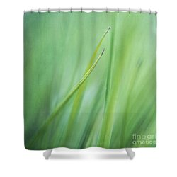 Feathery  Shower Curtain by Priska Wettstein
