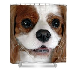 Kc-2 Shower Curtain by Kathleen Struckle