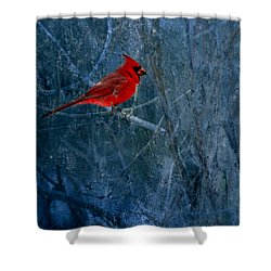 Northern Cardinal Shower Curtain by Thomas Young