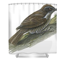 Philippine Creeper Shower Curtain by Anonymous