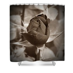 Rosebud Sepia Shower Curtain by Chalet Roome-Rigdon