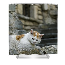 080720p005 Shower Curtain by Arterra Picture Library