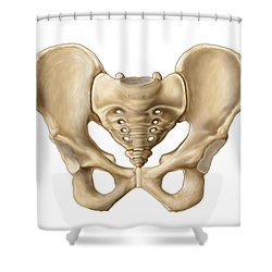 Anatomy Of Human Pelvic Bone Shower Curtain by Stocktrek Images