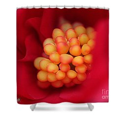 Begonia Named Nonstop Mocca Scarlet Shower Curtain by J McCombie