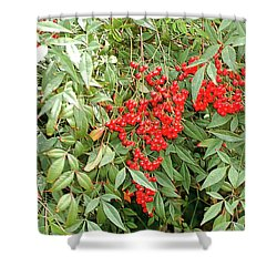 Berry Bush Shower Curtain by Kathleen Struckle