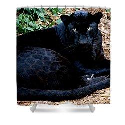 Black Leopard Shower Curtain by Mark Newman
