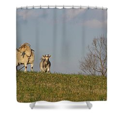 Caprine Hill Shower Curtain by Matt Taylor