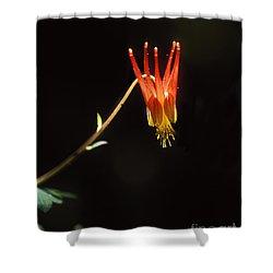 Columbine Shower Curtain by Steven Ralser