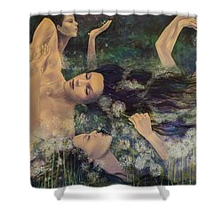 Dandelions Shower Curtain by Dorina  Costras
