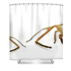 David And Goliath Daddy Longlegs Shower Curtain by Jorgo Photography - Wall Art Gallery